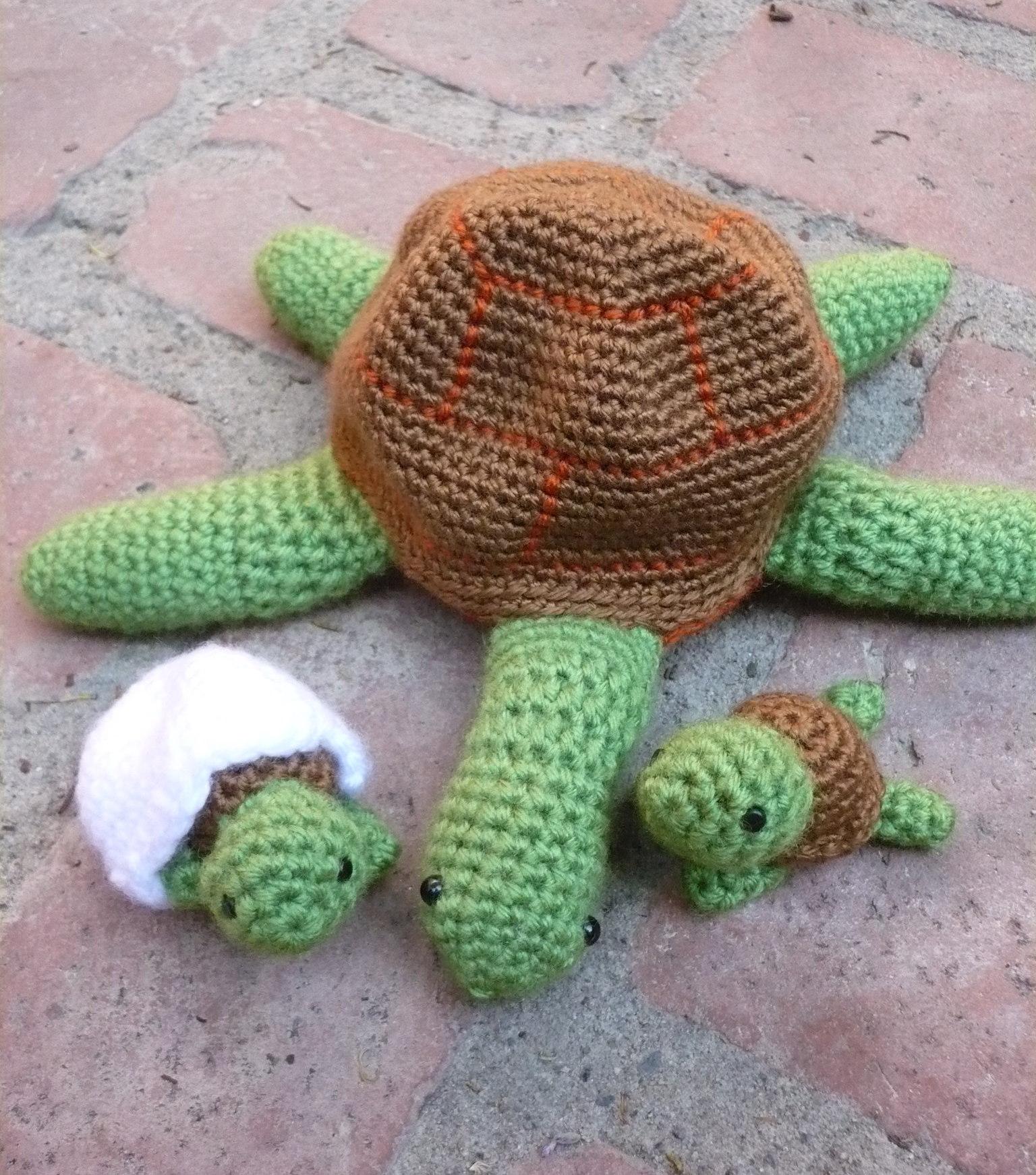 turtle amis