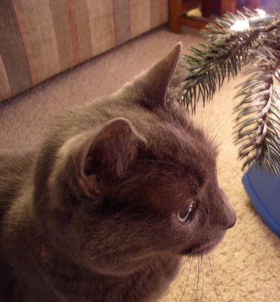 Smokey Christmas crop