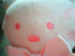Meow_meow_closeup1